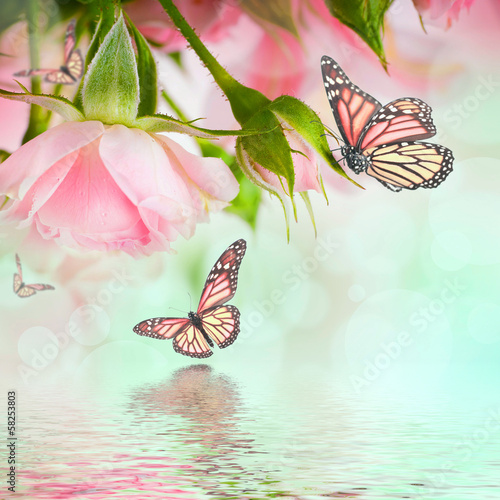 canvas print picture Beautiful roses and butterfly, flower, floral background