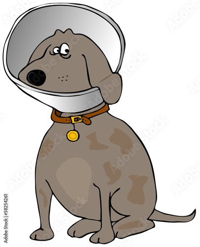 Dog with a head cone