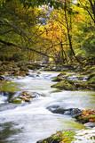 Leaf-strewn Stream in the Smokies