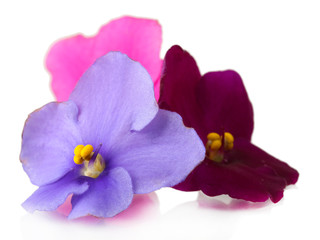Bright saintpaulia flowers, isolated on white