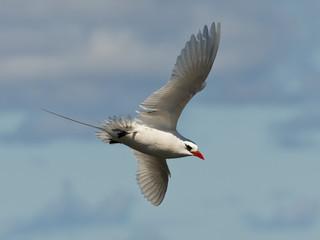 Flying Seabird