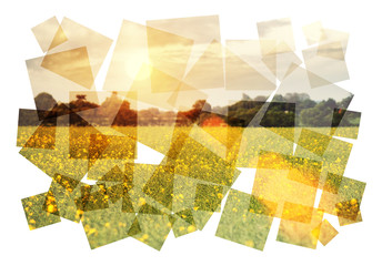 oilseed collage