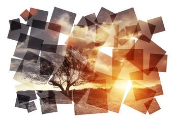 artistic sunset tree