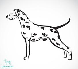 Vector image of an dalmatian dog