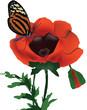 papavero con farfalla