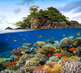 Fototapety Photo of a coral colony on a reef top