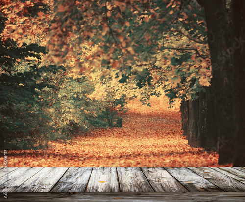 Beautiful autumn forest with wooden floor