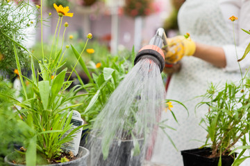Midsection Of Florist Watering Flower Pots