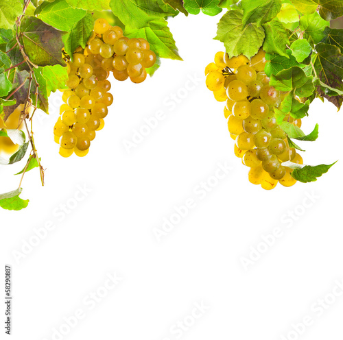 White wine grapes isolated on white background