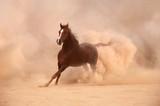 Purebred arabian horse running in desert - 58293251
