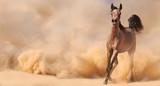 Purebred arabian horse running in desert - 58293259
