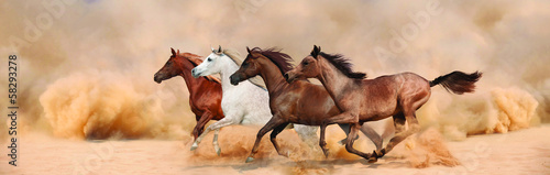 Herd gallops in the sand storm - 58293278