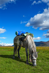 Horse, grass, mountains