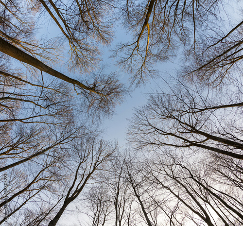 crown of trees with clear blue sky - 58305281
