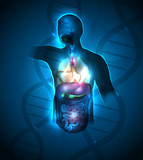 Abstract human anatomy background, DNA