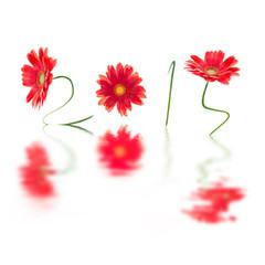 2014, fleurs rouges