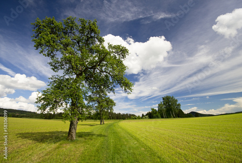 canvas print picture Baum