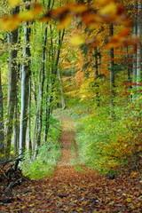 Waldweg im Herbst [kw-de]