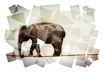 elephant on rope abstract