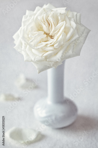 one beautiful white rose in a vase on a  table.