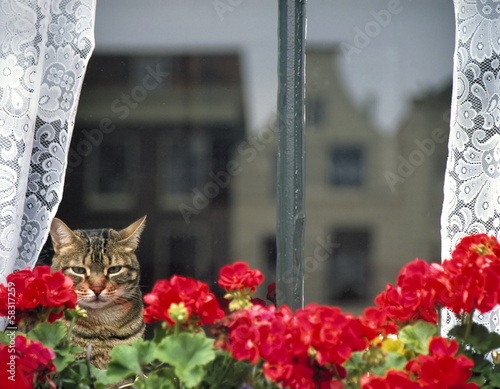 Domestic cat sitting behind a window, staring outside