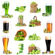 Green hop and beer  isolated on white