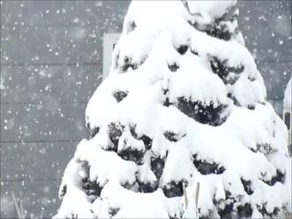 クリスマスツリー(スローモーション映像)