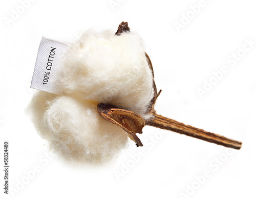 Fotobehang Planten Cotton plant flower with tag label on white background
