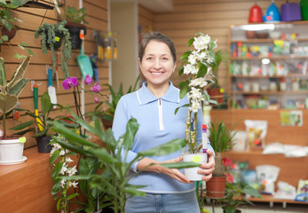 woman chooses Dendrobium orchid