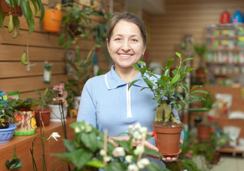 woman with  ficus plant  at flower store
