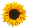 Sun Flower - 58328045