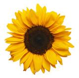 Fototapety Sun Flower
