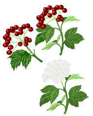 Twigs leaves berries and white flowers