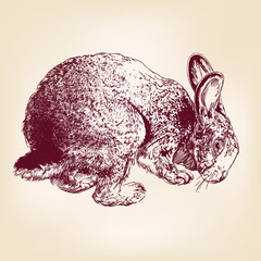 bunny hand drawn vector llustration realistic sketch