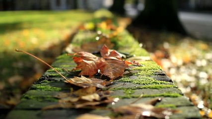 Autumn leaves in a park
