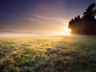 morning meadow landscape