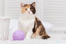 Chat avec une pelote de laine