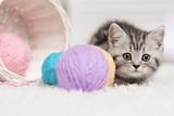Fototapety Kitten in a basket with balls of yarn