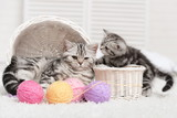 Two cats in a basket with balls of yarn - 58337237