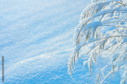 Winter background with a snow-covered grass