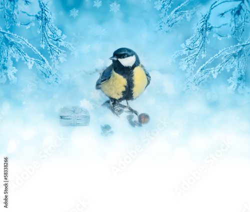 Blue winter background with bird tit and plants in frost. Christ