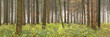 canvas print picture - Wald Panorama