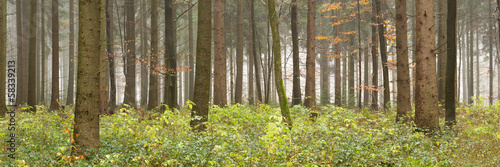 canvas print picture Wald Panorama