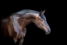 Tête de cheval isolé sur fond noir