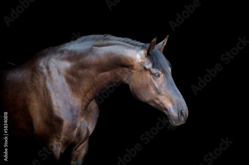 Horse head isolated on black background