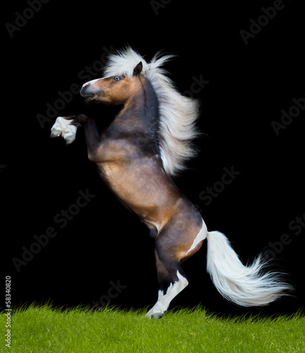 Horse reared on black background, isolated