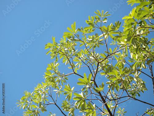 In de dag Bamboo Green leaves