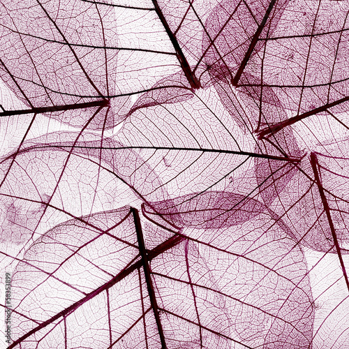 purple background from dried fall leaves