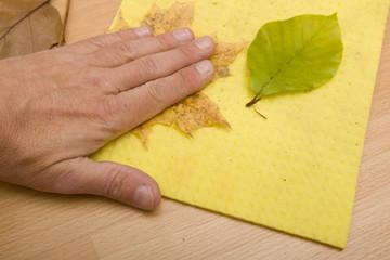 Pressen eines Blattes mit der Hand