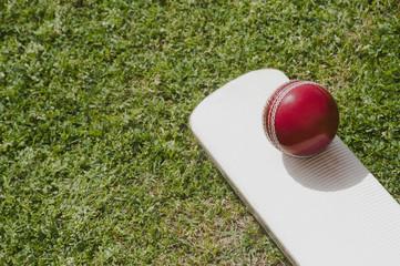 Cricket ball on a cricket bat in a field